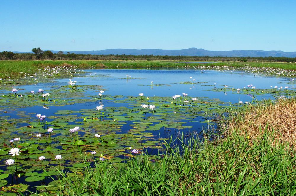 Taming Rhode Island Wetlands Registrations